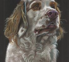 Clumber Spaniel by Jane Smith