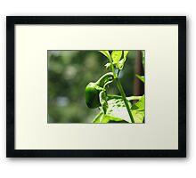 Small Pepper Framed Print