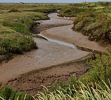 Blakeney mudflats and saltmarsh by Avril Harris