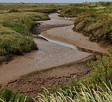 Blakeney mudflats and saltmarsh by Avril Harris
