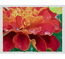 Red & Gold Marigold Photographic Print