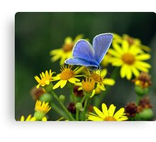 Blue on Yellow Canvas Print