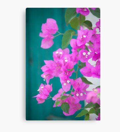 Morning Bloom Canvas Print