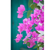 Morning Bloom Photographic Print