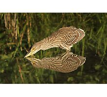 Mirror mirror on the wall who is the fairest heron of all? Photographic Print