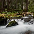 Big Quilcene Cascade - Olympic N. F. by Mark Heller