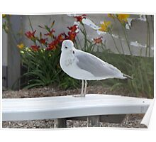 seagull sitting on picnic table part 2 Poster
