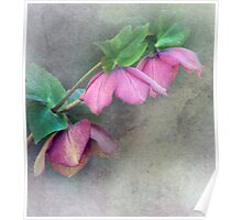Helebores for Emma Poster