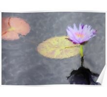 Water Lily Painted Poster