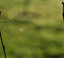 casting the net by metriognome