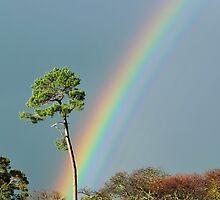 serious rainbow by metriognome
