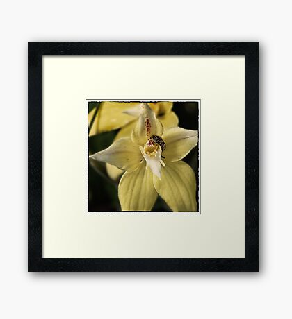 The Moment Of Pollination. Framed Print