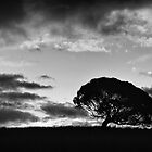 Lone Tree. by vilaro Images
