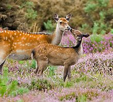 Give us a kiss Mum by Alan Forder