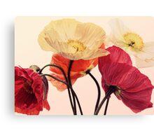 Posing Poppies Canvas Print