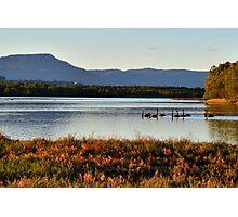 Swans at Lake Illawarra, NSW Photographic Print