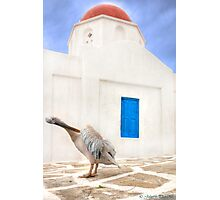 ..the local Pelican of Mykonos  {FEATURED} Photographic Print