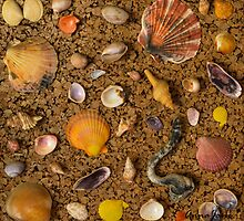 Seashells by AnnaJaneImages