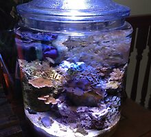 My coral reef in a cookie jar by rondo620