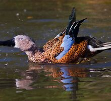 Dandy Duck by Krys Bailey