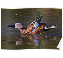 Dandy Duck Poster