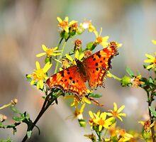 Butterfly Wild  by RhiLouiseM