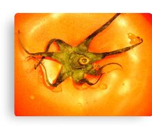 Orange Tomato Canvas Print