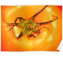 Orange Tomato Poster