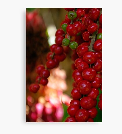 Berry Time Canvas Print