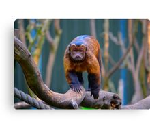 Monkey See... Canvas Print