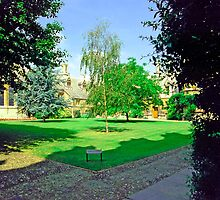 In Sidney Sussex College Gardens, Cambridge by Priscilla Turner