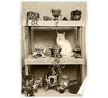 Maya Sitting On The Shelf   Poster