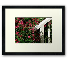 Aster Shadows Framed Print