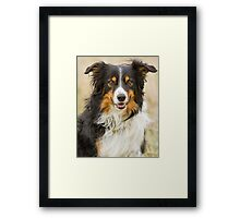 Border Collie Portrait Framed Print