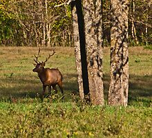 Bull Elk in Ponca by Lisa G. Putman