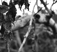 Decaying Leaf by JustAnEffigy