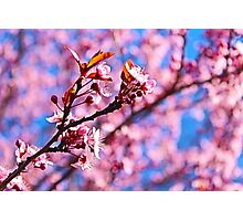 Spring is the air Photographic Print