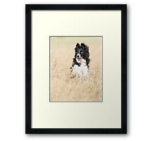 Border Collie in Dry Grass Framed Print