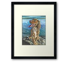 Cocker by the sea.... Framed Print