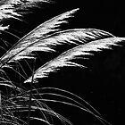Grass Feathers by Karen E Camilleri