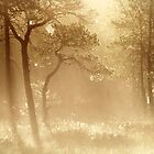 26.8.2013: August Morning by Petri Volanen