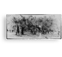 Vintage grecian olive grove Canvas Print
