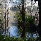 Cattai Wetland by Liz Worth