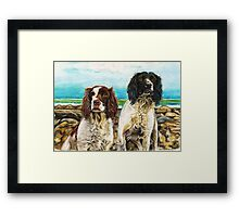 Springer fun in the sun Framed Print