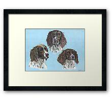 Syncerus Spaniels Framed Print