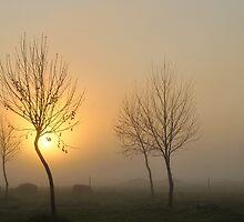 golden light of dawn #2 by metriognome