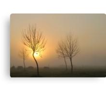 golden light of dawn #2 Canvas Print