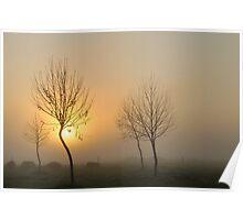 golden light of dawn #2 Poster