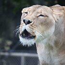 Lion's speaking by DaveZ