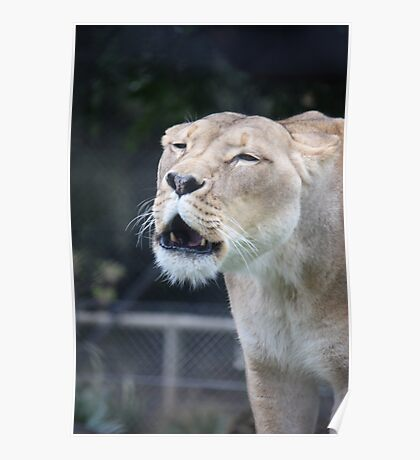 Lion's speaking Poster